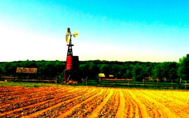 Fun Farms in and Around Austin