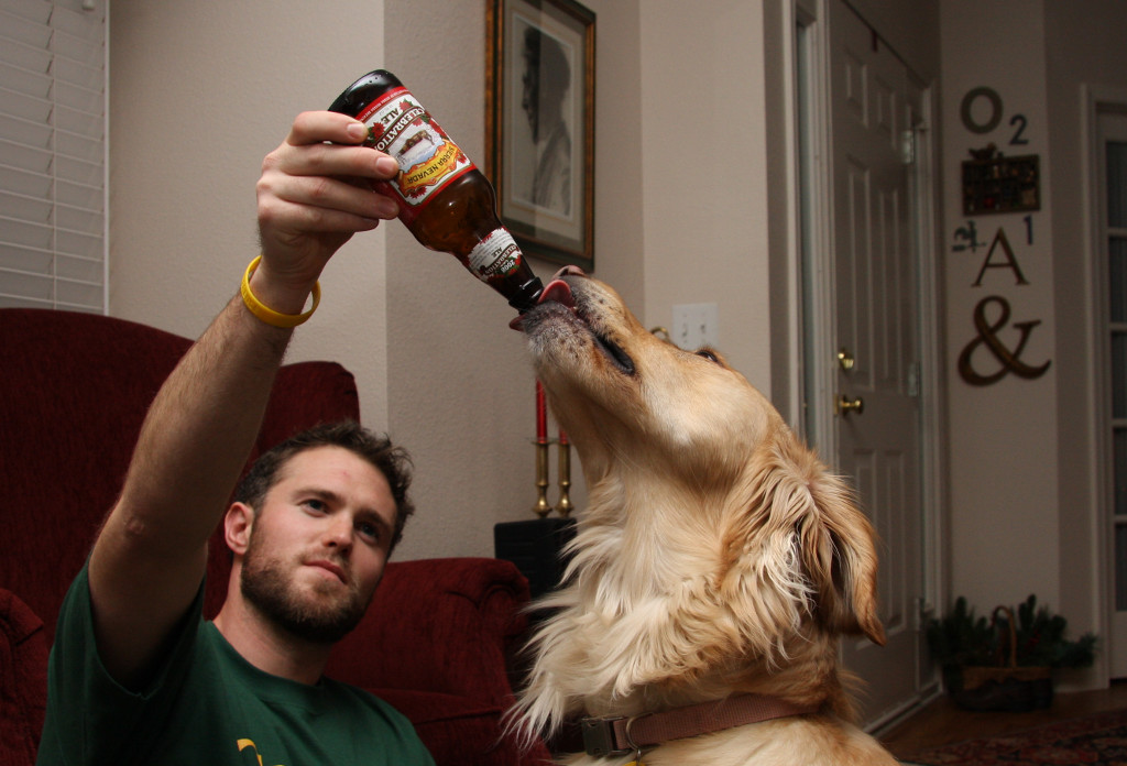 A dog drinking beer. Photo: Flickr user Andrew Magill, creative commons licensed.