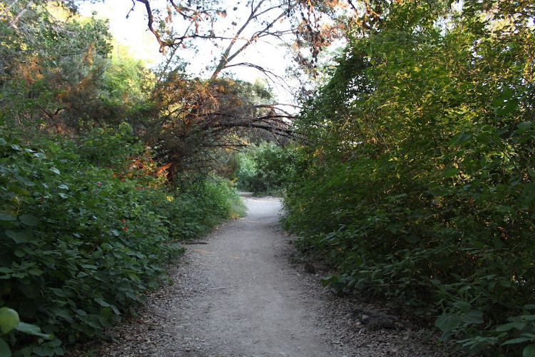 A trail in Austin's greenbelt. Photo: Flickr user Brandon Turner, creative commons licensed.