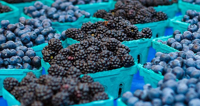 blueberries berries texas blackberries dewberries dewberry blueberry blackberry fruit vine