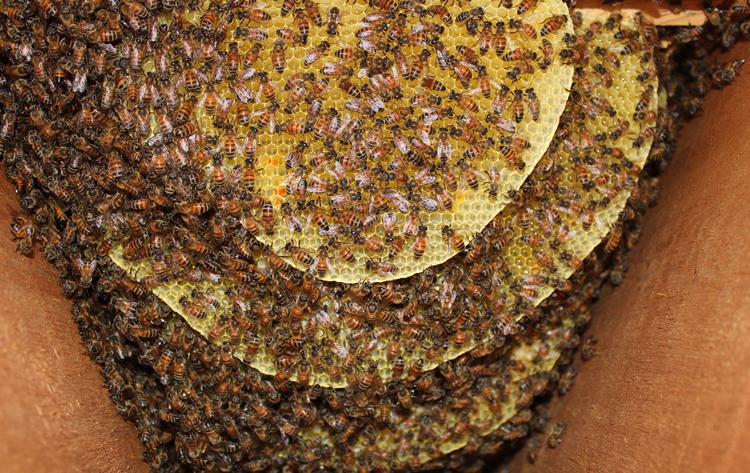 honeybee honey bee beekeeping beekeeper hive beehive swarm colony