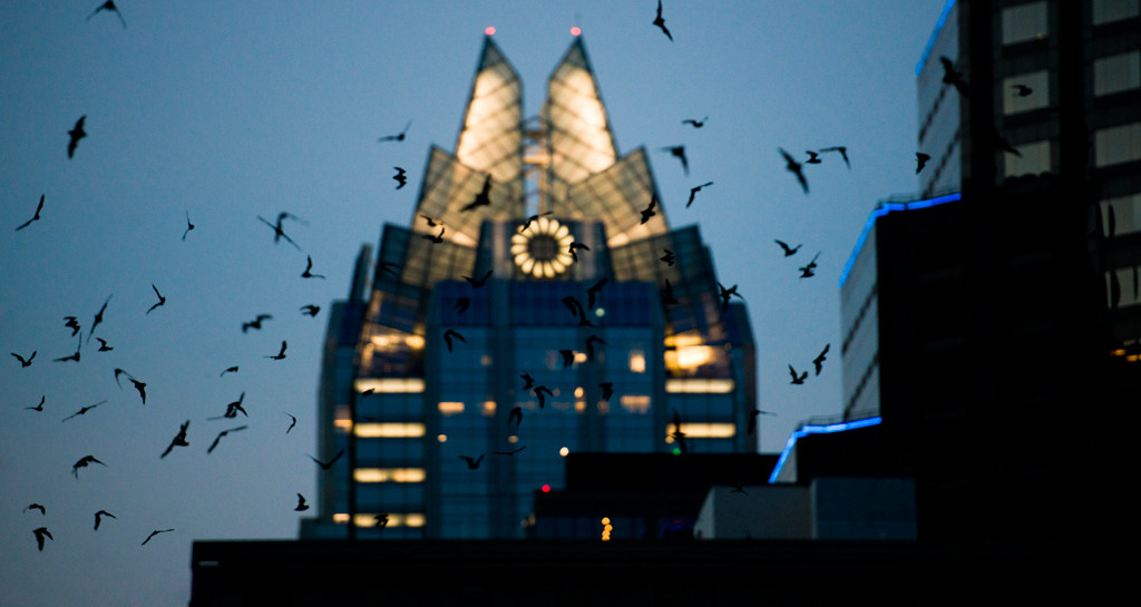 10 Astounding Facts About The Legendary Bats Of Austin