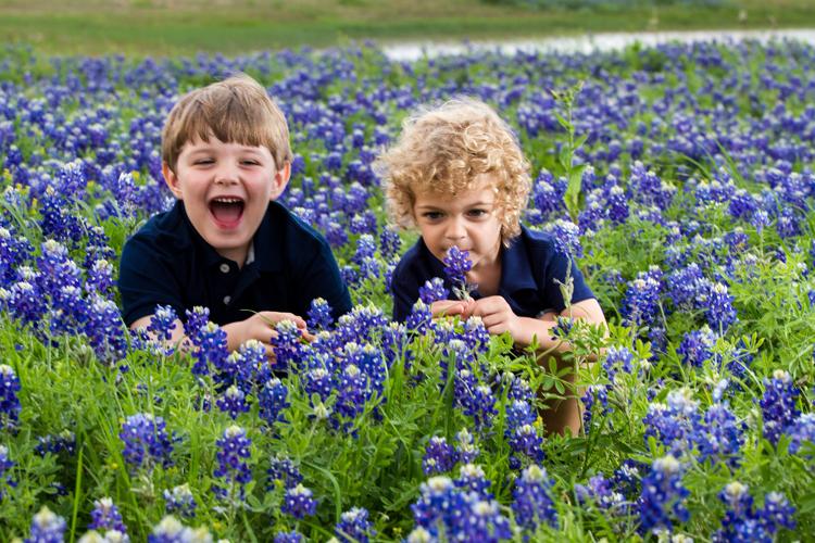 bluebonnet wildflower spring family child portrait poisonous toxic
