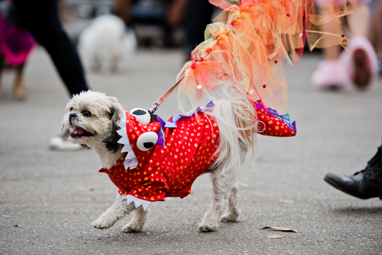 shih tzu dragon chinese monster