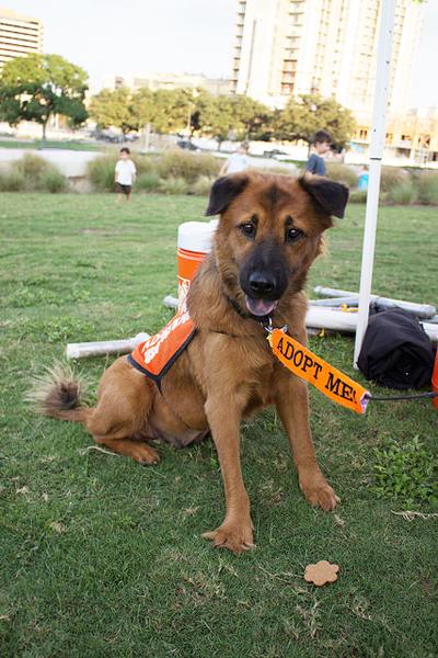 rufftail runners dog walking exercise austin pets alive adoption adopt me lady bird lake town hike bike ann roy butler