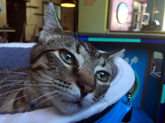Here's An Inside Look At Austin's Very First Cat Cafe