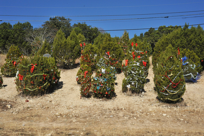 loop 360 highway Austin road cedar christmas trees community keep austin weird