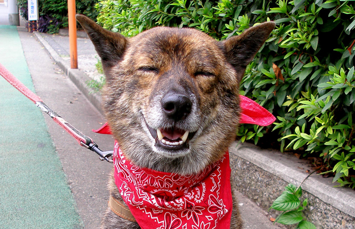 austin stocking stuffer dog pet cat bandana bow tie