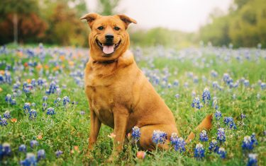 10 Ways To Keep Your Bluebonnet Photos Weird!