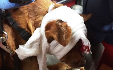 Injured Austinite Flees Car Wreck To Save Bloodied Dog