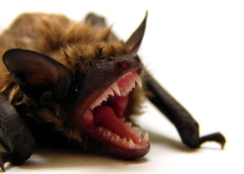 3 Terrifying Local Critters You Might Actually Want In Your Home
