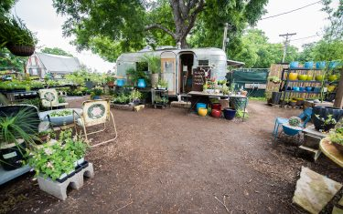 Tillery Street Plant Company On Learning To Appreciate Nature's Beauty In Austin