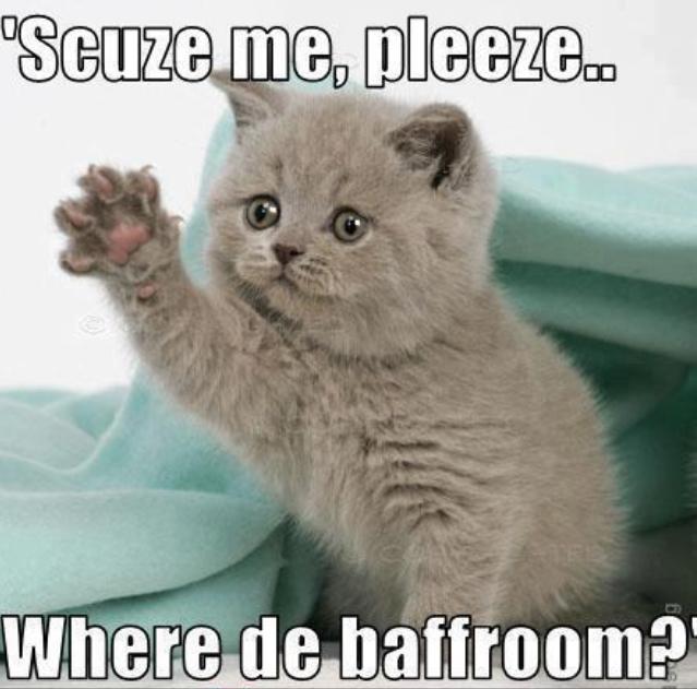 kitten-cute
