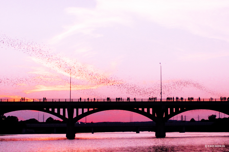 mexican free-tailed bat congress avenue bridge