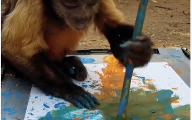 Move Over, Picasso: This Austin Zoo Capuchin Is A Total Art Wiz!