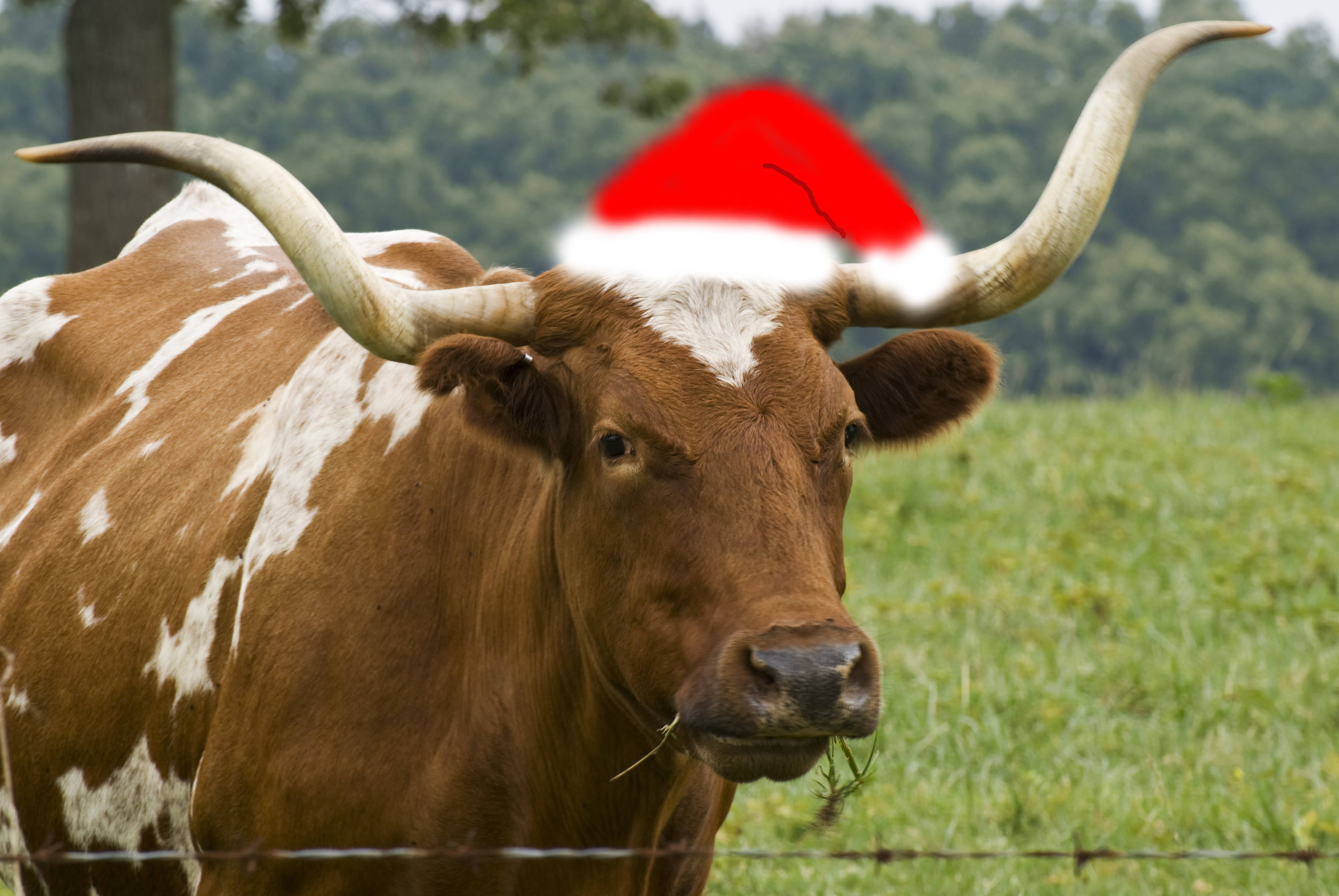 Check Out These Bevo-Approved Holiday Gift Ideas For UT Austin Fans!