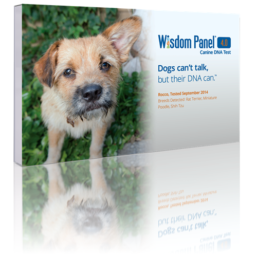 Photo: Wisdom Panel 4.0 Dog DNA Test ($)