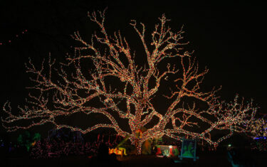 100+ Ways to Celebrate the Holidays in Central Texas