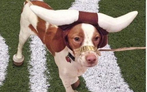 Austin's Best Pet Friendly Events August 2019