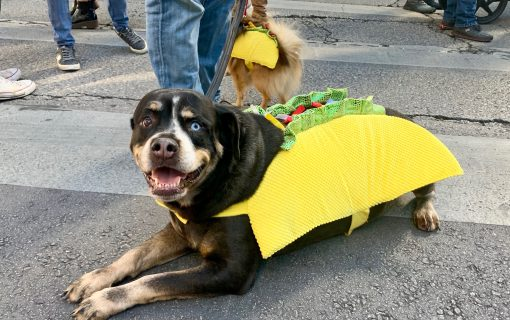 Austin's Best Pet Friendly Events November 2019