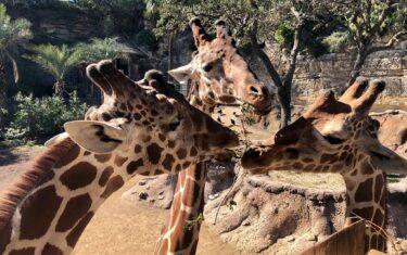 Take a Virtual Field Trip To The San Antonio Zoo