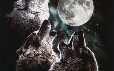 Here's An Idea: Let's Start Howling At 8PM To Thank First Responders
