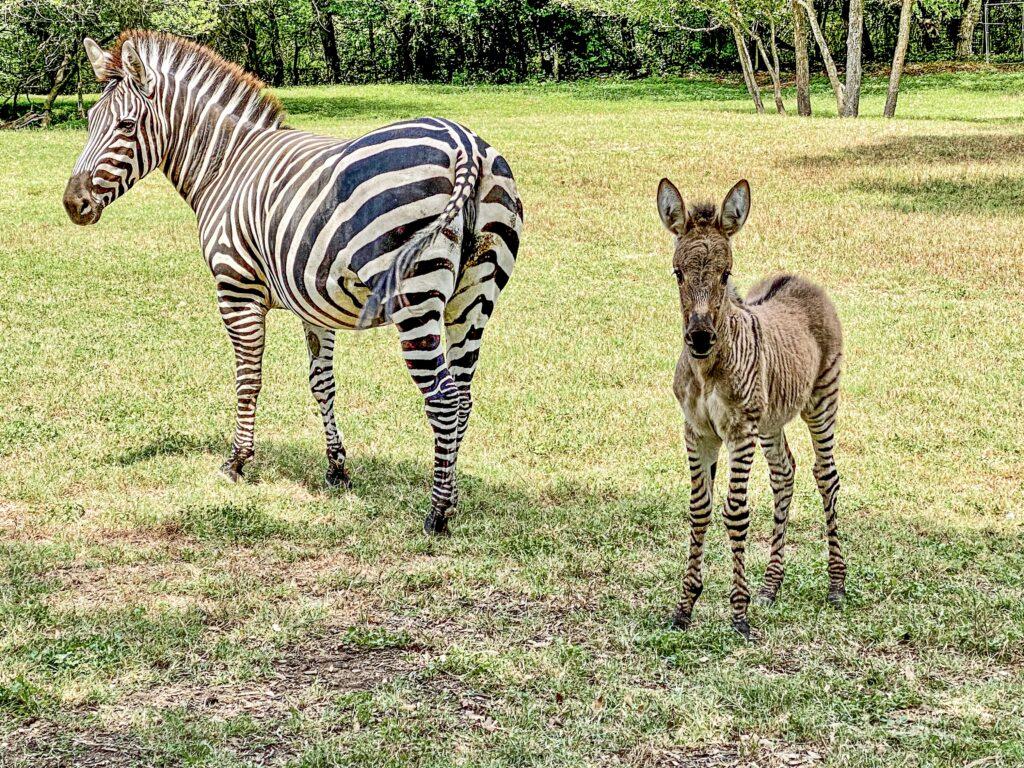 exotic animals in austin