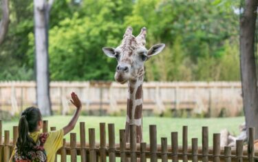 Not Ready To Travel? Take A Virtual Trip To The Fort Worth Zoo