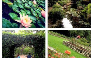 Zilker Botanical Garden: Budget-Friendly Outing for Families