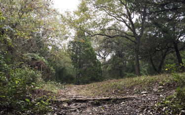 Adventure in Austin: Great Hills Park