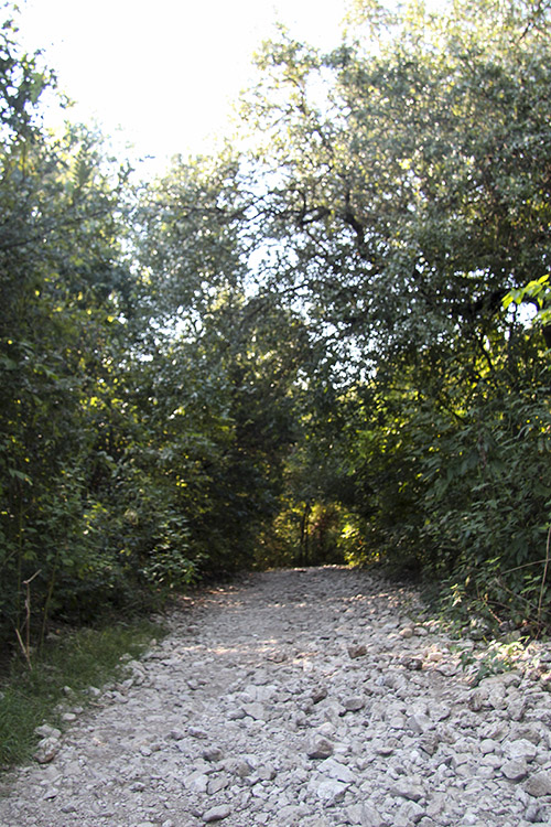 greenbelt_barton_springs_5