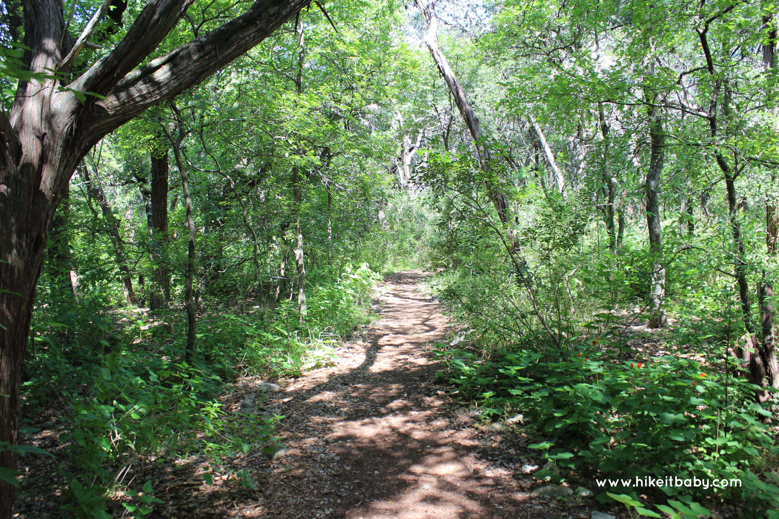 Mayfield Park Hiking Trails
