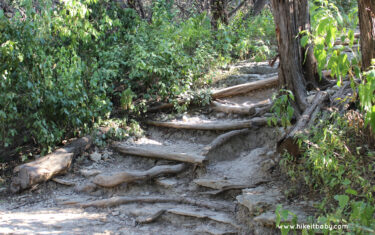 Park Profile: Turkey Creek Trail at Emma Long Park