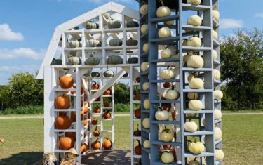 Here's All The Austin Pumpkin Patches, Halloween Fun, And Fall Festivals Happening in 2020