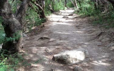 Grab The Fam And Head To One Of These Easy Austin Hikes