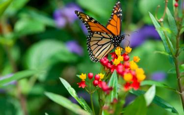 Monarch Appreciation Day at Zilker Botanical Garden