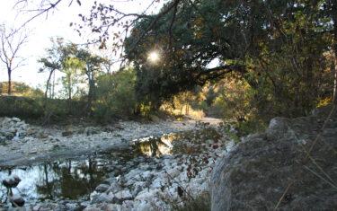 Adventure in Austin: Shoal Creek Greenbelt