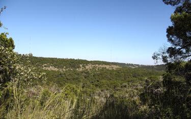Adventure in Austin: Wild Basin Wilderness Preserve