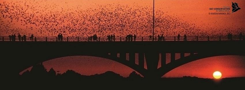 Congress Ave Bats