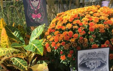 Día De Los Muertos Events in Austin
