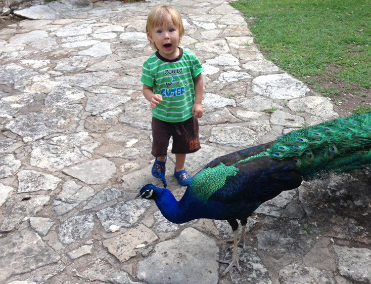 Things to do with preschoolers in Austin - Mayfield Park Peacocks